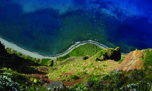 Vingård i Madeira